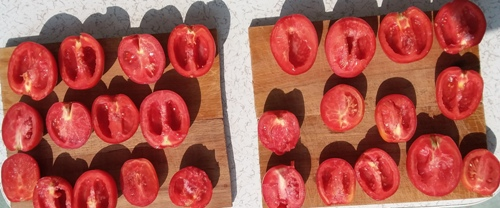 Sun drying tomatoes
